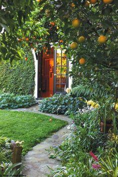 Use fruit trees in your garden garden trees garden design, g Fruit Garden, Garden Trees, Garden Paths, Patio Trees, Garden Cottage, Home And Garden, Garden Sofa, Garden Table, Amazing Gardens