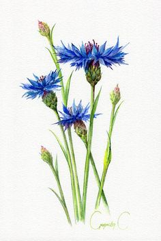 Сornflower Blue Flower Watercolor Original Painting from Watercolor Drawing, Floral Watercolor, Watercolor Paintings, Original Paintings, Watercolor Flowers Tutorial, Arte Floral, Blue Flowers, Pastel, Drawings