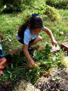 Children's Gardening Series: Wildlife in Winter Houston, TX #Kids #Events