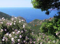 Quand partir en Corse - meilleure période pour partir en Corse ...