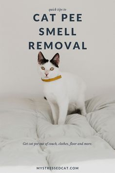 Quick tips to get the cat pee smell out of your couch, clothes, floor and more. Cleaning Cat Urine, Remove Cat Urine Smell, Cat Pee Smell, Cat Urine Smells, Cleaning Tips, Cat Urine Remover, Urine Odor, Urine Stains, Odor Remover