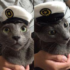 ♡ いまいちちゃんと撮れませんでしたが 可愛い被り物をしてるウォルトくん🐱 犬のおまわりさんのホワイトです🐈🍀 最近ガチャガチャが色々あって楽しい❤️ 早くまた可愛いのでないかな〜?😋 #cat#neko#ねこ#ネコ#猫#キャット #ロシアンブルー#オス猫#ウォルトくん #みんねこ#にゃび#はにぺと部#picneko #にゃんだふるらいふ#ピクネコ#美猫 #ニャンダフルライフ#ペコねこ部#愛猫 #にゃんすたぐらむ#ネコスタグラム#ぬこ #ねこまみれ#犬のおまわりさん#にゃんこ #ねこ部#猫バカ#猫の被り物#イケニャン #グレ猫倶楽部
