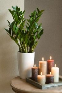 Wish list for the new house - plants - Zamioculcas