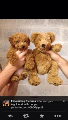 Teddy....puppy...teddy...puppy...