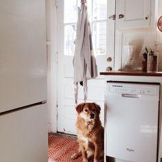 .Sweetest pup. [Jordana Claudia]