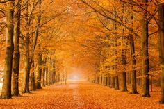 Autumn road - Gasselte, The Netherlands