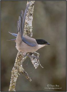 Beautiful Birds, Animals Beautiful, Magpie, Pet Birds, Creatures, Colorful Birds, Parrots, Amazing, Photography