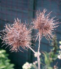 Dispersal of Seeds by Animals Dispersal of Seeds by Animals The post Dispersal of Seeds by Animals appeared first on Trending Hair styles. Seed Dispersal, Animal Articles, Botany, Hair Trends, Dandelion, Seeds, Second Grade, Experiment, Hair Styles