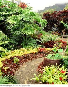Tropical Landscaping, Landscaping Plants, Outdoor Landscaping, Tropical Plants, Outdoor Gardens, Tropical Gardens, Landscaping Ideas, Landscape Design, Garden Design