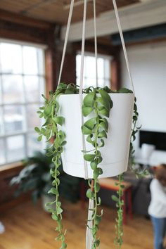 PLANT STAND DIYs — The Sorry Girls