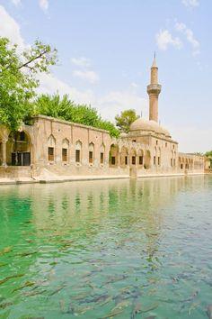 Turkey, Şanlıurfa, Balıklı Göl