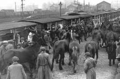 Feb 1919 - the day Sir Winston Churchill saved the WWI horses (ie, brought 1000s of them back to England) - Google Search (Source, below) for the story & more photos.