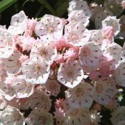 los mejores arbustos para plantar en el jardin 2