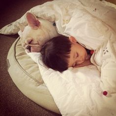 Sweet Friendship Between a Boy and His French Bulldog