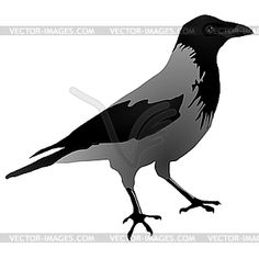 149 best ravens and crows images on pinterest crows ravens ravens rh pinterest com crow clip art free crow clip art images
