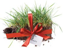Instant Turf - what a unique gift idea! Grab a gift voucher from Northern Victoria's leading turf supplier, Coolabah Turf. Instant Turf, Gift Vouchers, Simple, Plants, Gifts, Presents, Planters, Gifs, Gift Certificates