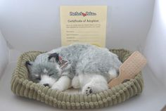 """Alaskan Husky Perfect Petzzz Lovable, cuddly, breathing, life-like dog stuffed animals…the name says it all! Perfect Petzzz are THE perfect pet for the young, old, and every age in between. Our breathing stuffed animals are extremely energy efficient and can last 3 to 4 months on one """"D"""" battery. They are made of quality materials …"""