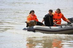 Életjel Mentőcsoport - Szolnok and Amper the German shepherd looking for a body. Search And Rescue Dogs, The Victim, German Shepherds, My Passion, Brave, Cute Animals, Pets, My Crush, Pretty Animals