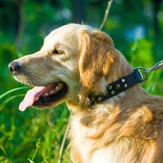 #Collier mode pour #chien de taille moyenne et grande «Lueur d'incendie» en cuir 30 mm de large -> 33,0 €  @fordogtrainersf Pensez à mentionner «J'aime» si ce produit vous plaît.