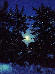Moon peaking through the trees. Photo taken by iyshia Brenner British Columbia, Trees, Moon, Celestial, Sunset, Outdoor, Beautiful, The Moon, Outdoors