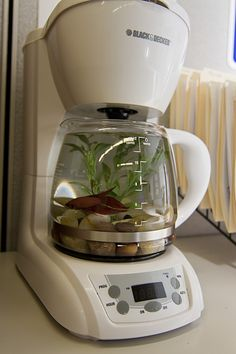 weird.. How fun & beautiful is THIS?!  We all have old coffee makers around. Clean that pot REALLY WELL, and add a beautiful Betta Fish!!  Unlike other fish, they do well in smaller environments. ((Just remember: because it holds less water, it becomes dirtier faster - so change that water often for your fish friend!!))