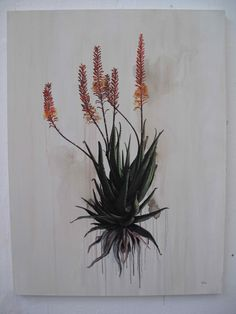 Aloes - Kurt Pio Flower Images, Flower Art, Aloe Oil, Plant Drawing, Botanical Illustration, Botanical Prints, Beautiful Paintings, Amazing Art, Print Patterns