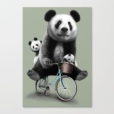 panda, panda bear, mommy, cups, birthday, bicycle, funny, cute,