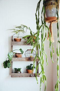 Never enough, plants.