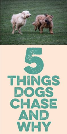 5 Things Dogs Chase And Why!