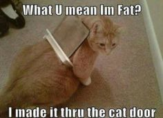 This cat really needs to look on it's back!