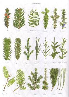 Sommaire: I) Les différents types d'arbres et leurs caractéristiques particulières. 1. Quel types d'arbres peut-on rencontrer dans la nature. 2. Quels points communs caractérisent ou …
