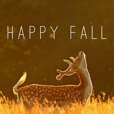 Happy Fall y'all! Time to get cozy!  #endofsummer #fall #cozytime