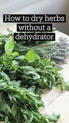Healing Herbs, Medicinal Plants, Herbs For Health, Plant Health, Organic Gardening Tips, Herb Gardening, Home Vegetable Garden, Growing Herbs, Plant Care