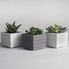 Set of Three Small Concrete Succulent Planters by NystromGoods