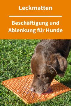 Mit Leckmatten kannst Du Deinen Hund für eine ganze Weile beschäftigen, ohne ihn dabei mit Futter vollzustopfen. Denn schon mit sehr wenig Futter bekommt man mit Schleckmatten eine Beschäftigungszeit von 15-20 Minuten hin. Leckmatten können außerdem wunderbar eingesetzt werden, wenn Dein Hund abgelenkt werden soll, zum Beispiel beim Krallen schneiden oder der Fellpflege. Weitere Informationen über Schleckmatten für Hunde findest Du in unserem Beitrag #hundebeschäftigung #hundezubehör #hunde Bobby, Pink, Pets, Bloodhound, French Bulldogs, Dog Owners, Dog Accessories