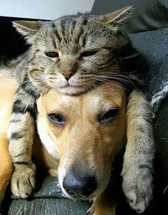 I'm catdog