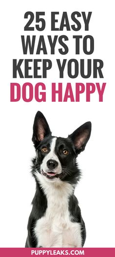 Looking for some simple ways to keep your dog happy? From letting your dog sniff around on your daily walk to making some DIY dog toys, here's 25 ways to make your dog happy. Fun indoor & outdoor games and activities to keep your dog happy, active, busy and entertained. Dog boredom buster ideas. #dogs #doglife #puppies  #dogcare #dogtips
