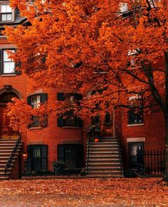 Autumn Scenery, Autumn Trees, Fall Leaves, Travel Qoutes, Beautiful Places, Beautiful Pictures, House Beautiful, Autumn Cozy, Autumn Fall