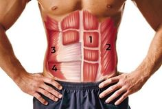 So sieht es unter Ihrer Bauchdecke aus