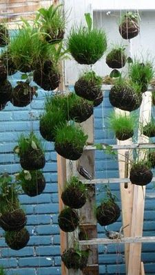 Hanging garden I am DOING this...