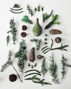 """COUNTRY ROAD,Melbourne, Australia, """"Lush Christmas greenery: fir, pine cones and spruce"""", pinned by Ton van der Veer"""