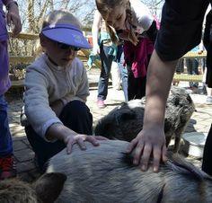 Working with Wildlife Summer Camp Cincinnati, Ohio  #Kids #Events