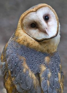 Owl swivels its head backward and then tips it completely upside down...
