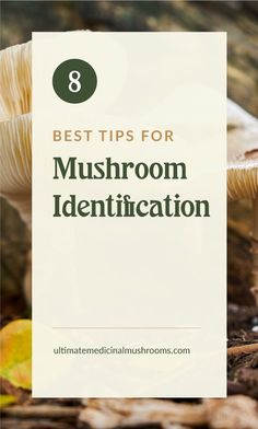 Mushroom hunting for beginners can be quite challenging and when it come to identifying poisonous mushrooms, it's very crucial that you do your research before you go out on your first mushroom foraging trip. Here are 8 easy tips on how to identify edible mushrooms tell them apart from the poisonous ones. | Discover more about medicinal mushrooms at ultimatemedicinalmushrooms.com #mushroomhunting #mushroomforaging #huntingformushrooms #wildmushrooms Poisonous Mushrooms, Edible Mushrooms, Growing Mushrooms, Wild Mushrooms, Stuffed Mushroom Caps, Stuffed Mushrooms, Mushroom Identification, Mushroom Species, Mushroom Varieties