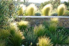 Graminées, stars des jardins secs,peu gourmandes en eau, dans tous les types de sols, mm les plus pauvres. Stipa tenuissima avec les Lavandula augustifolia 'Richard Grey':