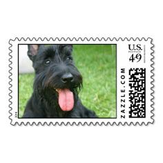 >>>Low Price Guarantee          Scottish Terrier Postage Stamp           Scottish Terrier Postage Stamp we are given they also recommend where is the best to buyShopping          Scottish Terrier Postage Stamp Here a great deal...Cleck Hot Deals >>> http://www.zazzle.com/scottish_terrier_postage_stamp-172549691010347991?rf=238627982471231924&zbar=1&tc=terrest