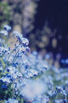 Blue blooms - Plants and foliage outdoors. Trees, plants, glowers and gardening.