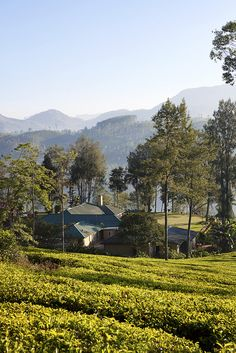 Tea Trails (by Dilmah) Luxury Accommodation
