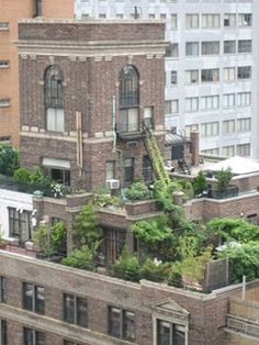Rooftop garden in Manhattan.  I feel like I know where this is.