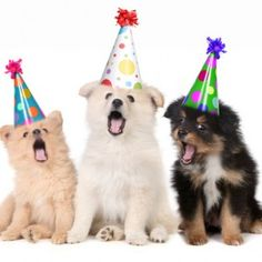 How to Throw a Birthday Party for Your Dog #dogpary #dogbday